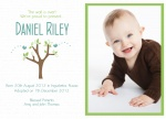 Special Baby Bird's Nest -  Adoption Announcement Cards