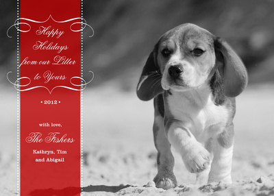 Personalized Holiday Cards, Lil Litter Design