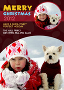 Pawsitively-Dog Christmas Cards