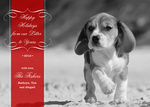 Lil Litter - Dog Christmas Cards 