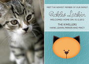 Kitty - New Kitten Announcements - Pet Announcements