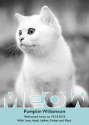 Pet Photo Cards - Meow
