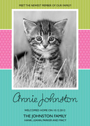 Pet Photo Cards - Sweet Cat
