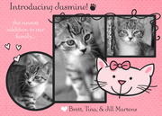 Pet Photo Cards - Kitty Paws