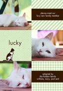 Pet Photo Cards - Pattern