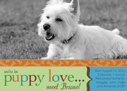 Puppy Love - Pet Announcements
