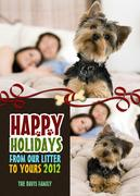 Dog Christmas Cards - All In The Family