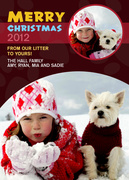 Dog Christmas Cards - Christmas Litter